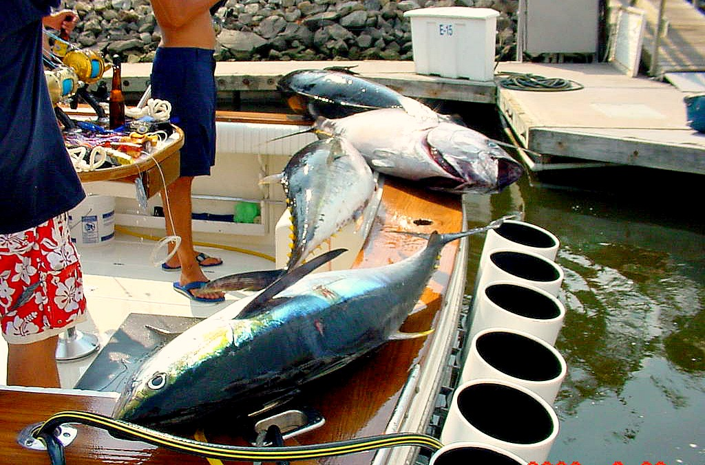 09 19 2014 Tuna Caserole 600 pxls