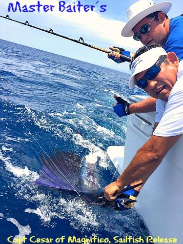 Capt. Cesar Releasing a Sailfish of Punta Mita Point